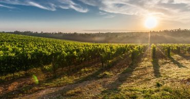 vinoterapia belleza vino